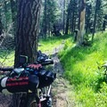 Singletrack outside of Mill Flat.- Bikepacking the Oregon Timber Trail