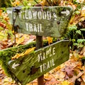 Forest Park's Maple Trail.- 20 Great Fall Hikes in Oregon