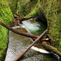 Gorge over Oneonta Falls.- Hiking Through the Years: 30+ Years in the Columbia River Gorge
