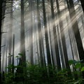 Sunlight filters through the a forest canopy.- 25 Favorite National Forests for Adventure