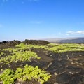 A heiau on the Puna Coast Trail in Hawai'i Volcanoes National Park. When you come across ancient structures, do not enter them. - Rethinking Leave No Trace: Increasing Your Cultural Awareness