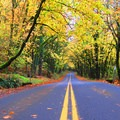 Drive along Historic Highway 30 in the Columbia River Gorge.- 20 Great Fall Hikes in Oregon