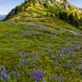 Wildflowers blooming in the Stevens Peak saddle.- Embracing the Struggle