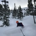 Quebec Trees in Coquihalla.- How to Get Into Backcountry Skiing + Boarding