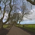 Dark Hedges in Ireland.- Ecotherapy: Exploring People's Connections with Nature