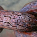 Corroded chain links along Marine Drive near Fort Point.- Chris Young, March's Contributor of the Month