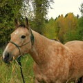 Sundance, my riding partner.- Yoga and Hoofbeats: Rejuvenation in the heart of Montana