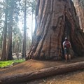 Standing next to a giant sequoia.- Ecotherapy: Exploring People's Connections with Nature
