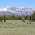 Deer grazing in Tuolumne Meadows, Yosemite National Park.- Ecotherapy: Exploring People's Connections with Nature