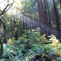 Enjoying the solitude of Muir Woods.- Ecotherapy: Exploring People's Connections with Nature