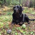 Kahana enjoying a trailhead kick-back.- A Guide to Summer Adventuring with Your Dog