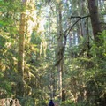 Leiffer and Ellsworth Loop Trails.- Hiking in California's Redwoods