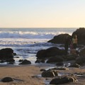 Checking the tide pools along the rocks at Muir Beach. - 9 of the West Coast's Best Tide Pools