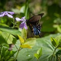 Butterflies and wildflowers are a perfect mix for an afternoon stroll. - 10 Incredible Wildflower Hikes in Great Smoky Mountains National Park