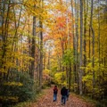 Take the family for a stroll under a canopy filled with the colors of autumn on a weekend getaway in the Smokies. - A Guide to Leaf-peeping Weekends in the Blue Ridge Mountains