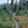 Lemei Trail.- Fall Color in Indian Heaven Wilderness, WA