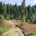 A meadow along the trail.- Fall Color in Indian Heaven Wilderness, WA