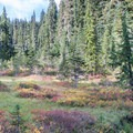 Fall color in a meadow in Indian Heaven Wilderness.- Fall Color in Indian Heaven Wilderness, WA