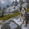 Hiking in the fall at Mount Baldy in California.- Dog Etiquette on the Trail