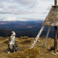 Summiting Mount Urchin in New Zealand.- Dog Etiquette on the Trail