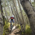 The aspen forest of the Wasatch Crest Trail.- Mountain Biking in Park City