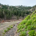 Klickitat Trail from Harms Road Trailhead.- Wednesday's Word - Klickitat