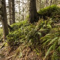 The access trail to La Push, Second Beach.- Wednesday's Word - Quillayute