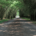 Bamboo arch entrance to Lancetilla Botanical Gardens.- The Transformative Experience of Traveling Alone