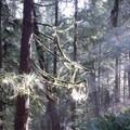 Light streams down onto the Gywnn Creek Trail.- Wednesday's Word - Yachats