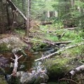 """Lincoln Brook Trail.- 6 """"Off-the-Beaten-Path"""" Hiking Trails in the White Mountain National Forest"""