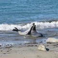 Sea lions at play in San Simeon.- Girls Who Glamp: Big Sur Style