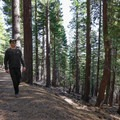 The hike to Maggie's Peak begins by climbing through forest.- 5 Incredible Fall Hikes Near South Lake Tahoe
