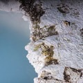 Edge of a Hot Spring.- Wolf Tracking in Yellowstone National Park