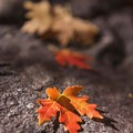 Such a beautiful time of year to look at the details of life.- How to Photograph Autumn Colors
