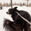 Enjoying the snow.- Dog Etiquette on the Trail
