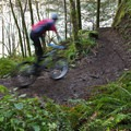 One of the more technical sections of North Fork Trail.- Mountain Biking Oakridge's North Fork Trail