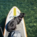 The Big Earl takes well over the recommended 200 pound weight limit, so you may be able to bring a friend with you.- Gear Review: NRS Big Earl Stand-up Paddleboard