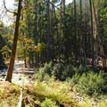 Ohanapecosh River from the Ohanapecosh campground.- Wednesday's Word - Ohanapecosh
