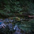 Relaxing in the Opal Creek Wilderness.- Asleep in the Arms of Ancients