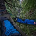 Cozy in the canopy.- Asleep in the Arms of Ancients