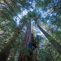 Ascending into the canopy of a 225-foot Douglas fir.- Asleep in the Arms of Ancients
