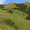 Big Rock Trail.- Dog-Friendly Trails Near San Francisco