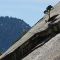 Along the Tuolumne Meadows to Yosemite Falls portion of the JMT.- Wednesday's Word - Tuolumne