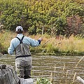 Catching dinner.- Bringing a Camping Ethic Back Home