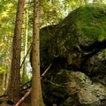 Large boulders along the trail at Oyster Dome.- Where to Find Mushrooms in the Pacific Northwest