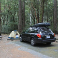 A typical campsite in Panther Flat Campground.- No Memorial Day Plans? Let's Camp in the Redwoods!