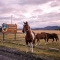 Wild horses are on duty as the morning welcoming crew for Torres del Paine National Park.- 25 Photos That Will Make You Want to Adventure in Patagonia