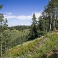 Flowers and aspens along the ridge.- Mountain Biking in Park City