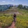 Rick Riding through wildflowers along the ridge.- Mountain Biking in Park City