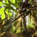 Sendy on Swamp Donkey.- Top 5 Mountain Bike Trails in Golden, British Columbia